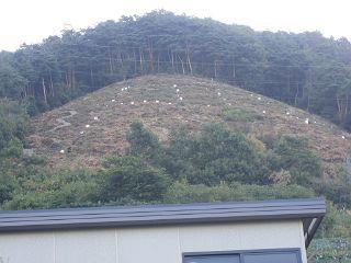 鳥居焼き2009-001