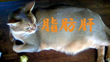 脂肪肝12