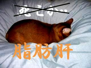 脂肪肝15