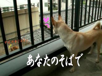 東京サバクポチ子1