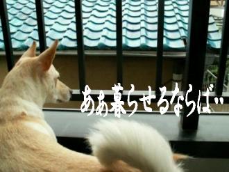 東京サバクポチ子2