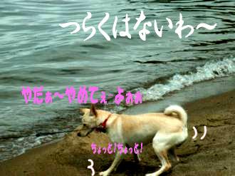 東京サバクポチ子6