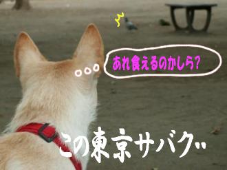 東京サバクポチ子7