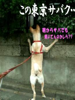 東京サバクポチ子8