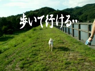 東京サバクポチ子3
