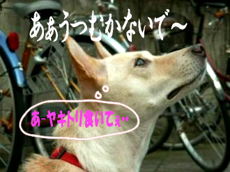 東京サバクポチ子5