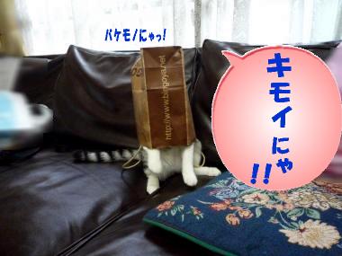 レポ-タ-純3
