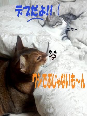 blog_genjun10.jpg