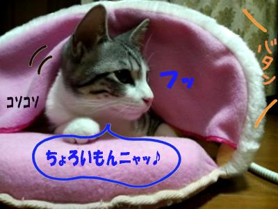 blog_jun71.jpg