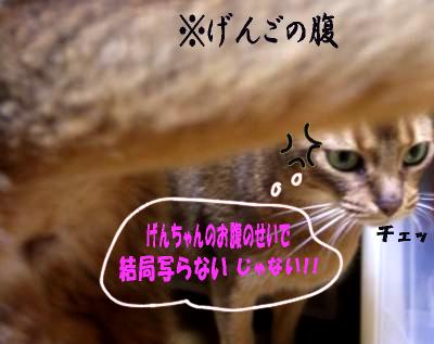 blog_vivigen79.jpg
