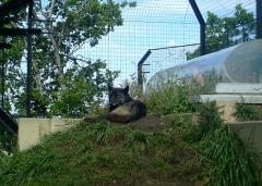 旭山動物園9