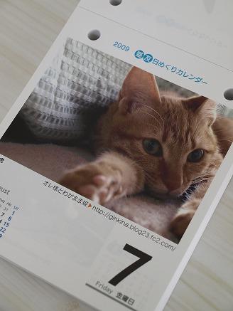 猫友日めくりカレンダー3