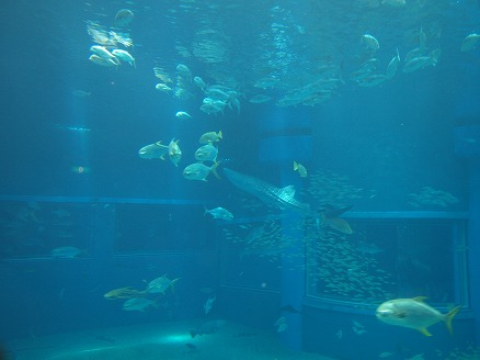 海遊館23