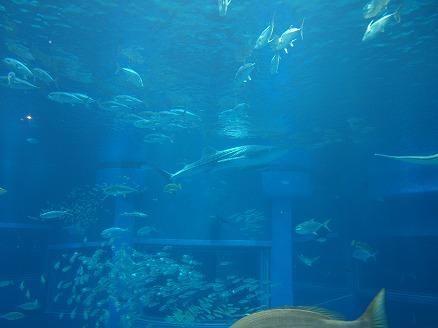 海遊館24