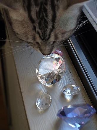 gin101_20081018084646.jpg