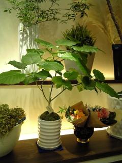 1106観葉植物