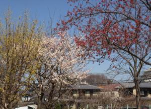 東村山中央公園 020