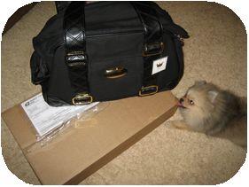 alyson bag
