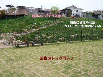 たんぽぽの庭全景ブログ