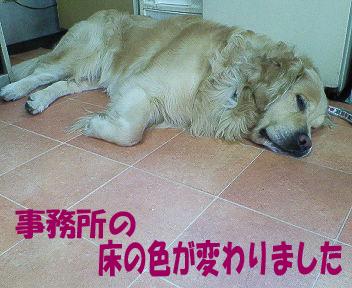 NEC_0184ブログ