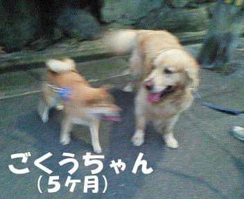 NEC_0189ブログ