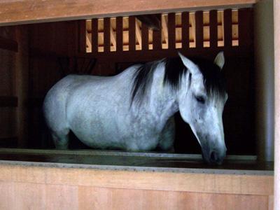 外宮参拝 馬