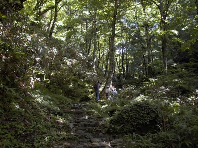 若杉天然林