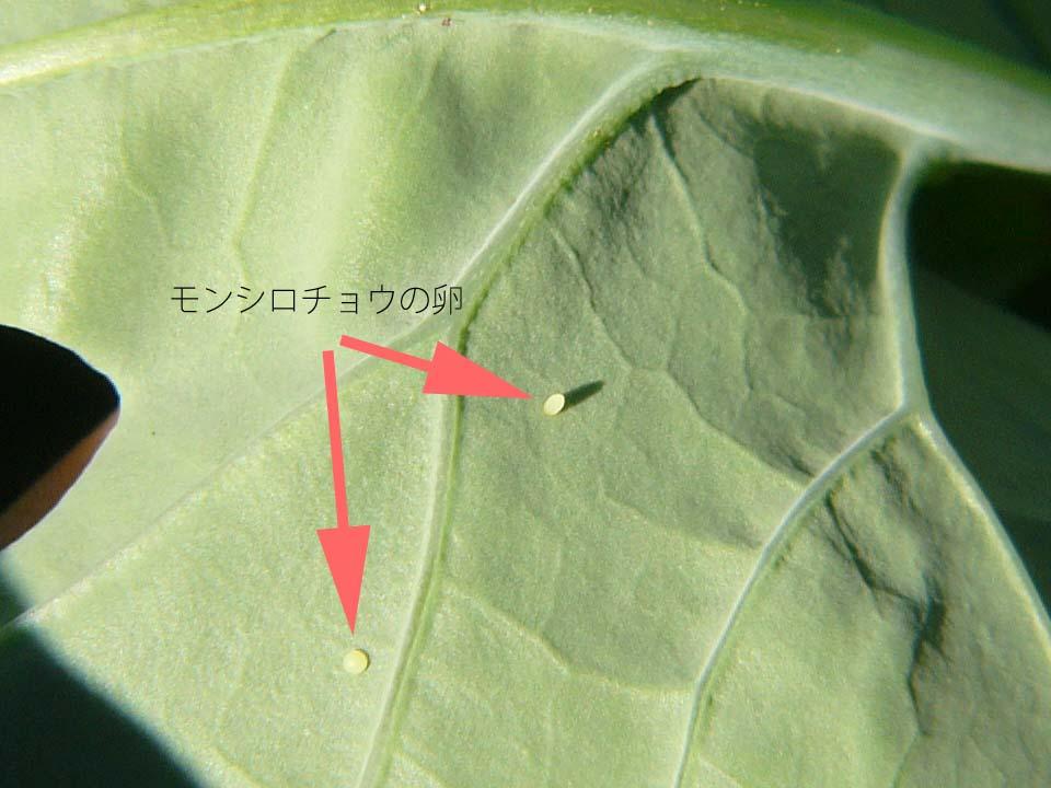 20080927(3).jpg