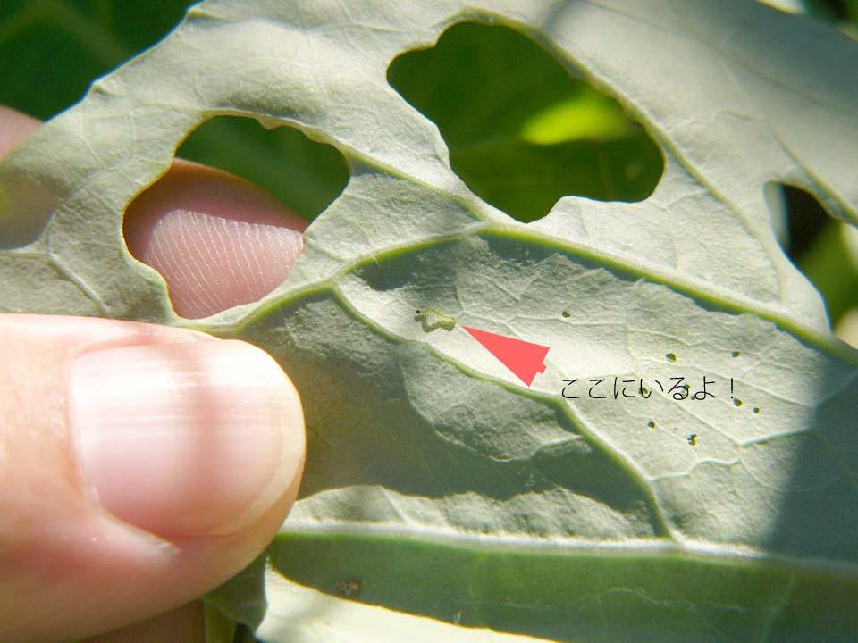 20080927(4).jpg