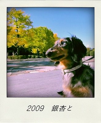 20091103 136-pola