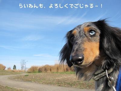 暮れのごあいさつ (1)