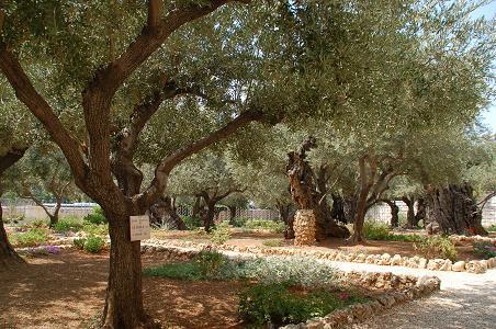 エルサレム0302