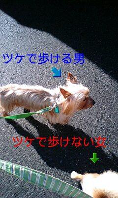 poposanpotsuke.jpg