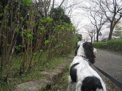 blogpictures 072
