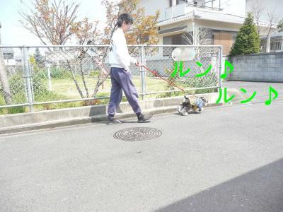散歩のミロク1-s