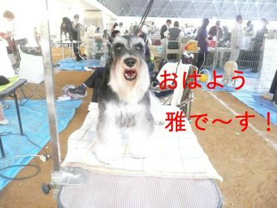 ミヤビ近畿インター1-s