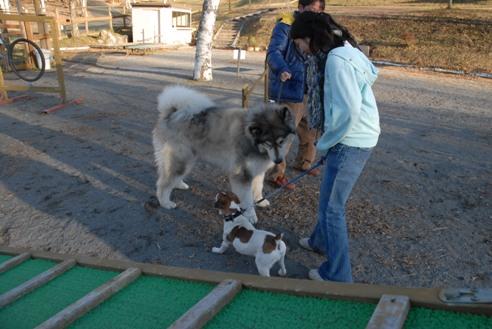 八ヶ岳自然文化園 192