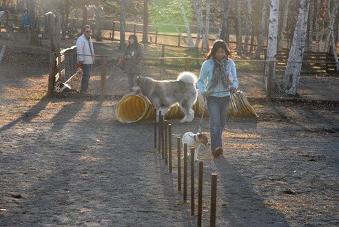 八ヶ岳自然文化園 194