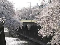 2005_sakura_04_thumb.jpg