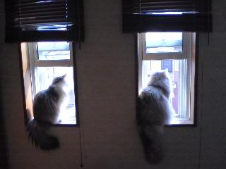 窓が小さいとこんな感じに・・・