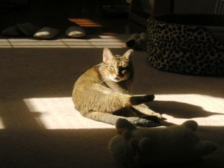 陽だまりの猫