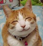 超癒される猫