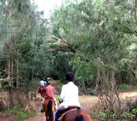 horsebackriding002.jpg