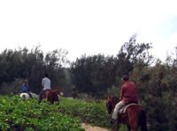 horsebackriding003.jpg