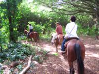 horsebackriding004.jpg