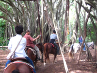 horsebackriding005.jpg