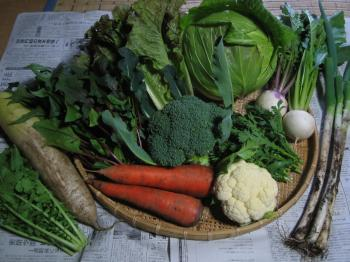 11月の野菜セット