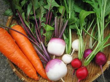 カラフルな野菜達