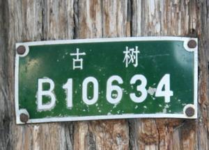 2008011805.jpg