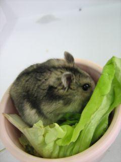 ポテト野菜に隠れる